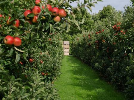 Hiljadu hektara za milion sadnica