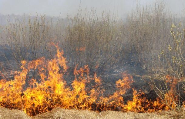 Požar nadomak Surdulice