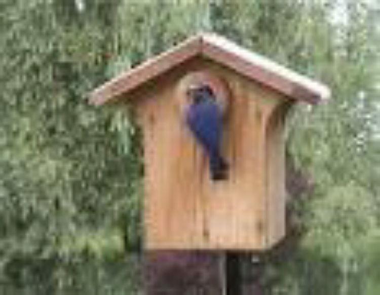 Najlepše kućice za ptice