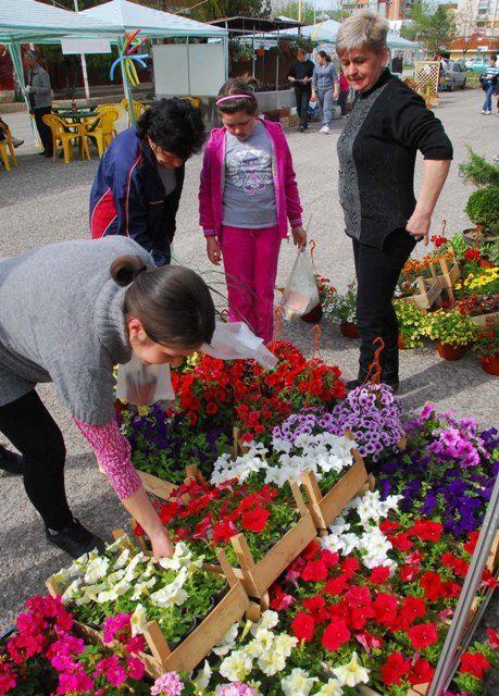 Dva sajma cveća u Nišu