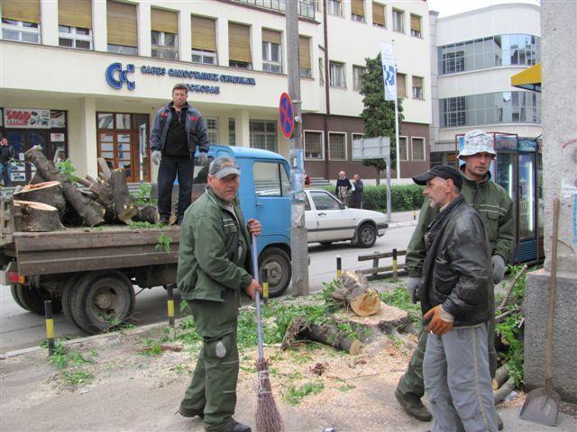 "Umesto ""kiselog stabla"", novi drvored i pločnik"