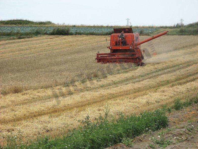 Jedva preživeo ispod tone i po pšenice