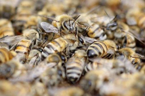 Japanci pomažu pčelarstvo na jugu Srbije