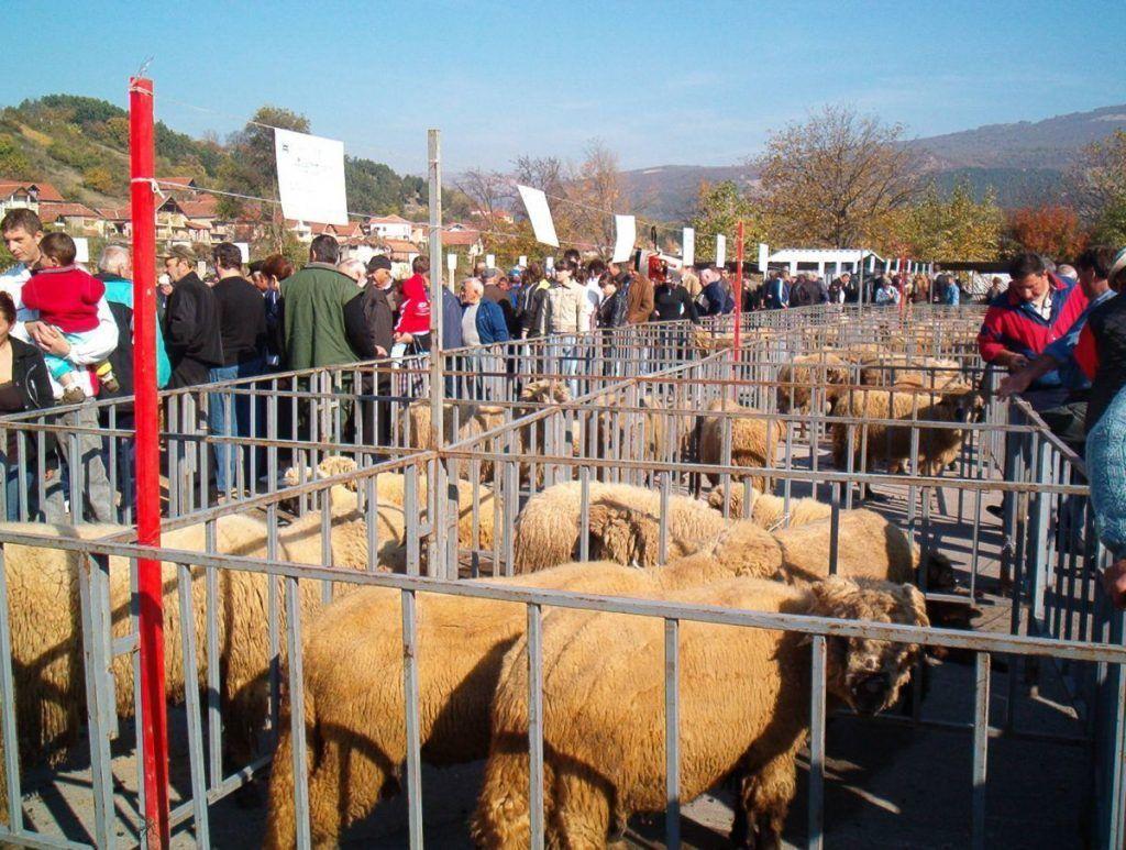 Tošićima nagrade za najbolju ovcu i ovna