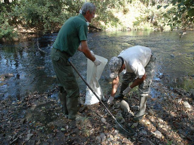 Iz Toplice izvađeno sedam hiljada uginulih riba