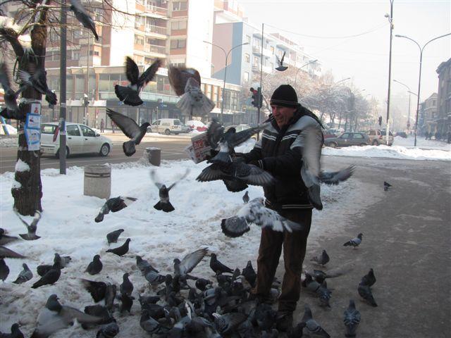 I golubovi se smrzavaju na minus 20