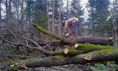 Zbog šumske krađe uhapšeno pet Makedonaca