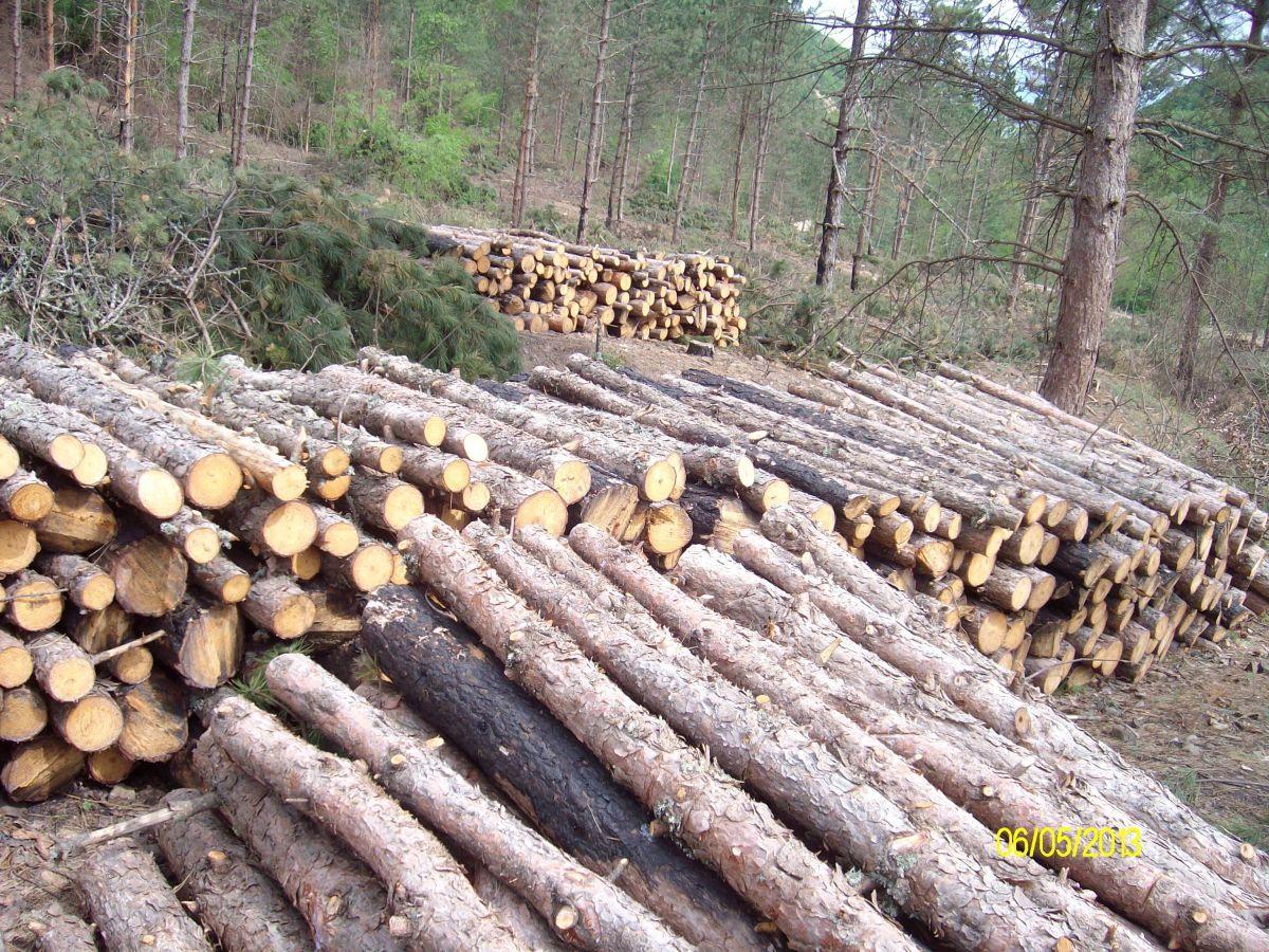 Bespravna seča 120 kubnih metara drveta u Prokuplju
