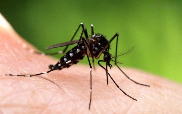 Mi nemamo komarce zaražene virusom Zapadnog Nila