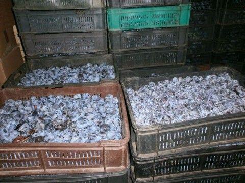Svinje, šljive i paprike, najzastupljeniji u Nišavskom okrugu