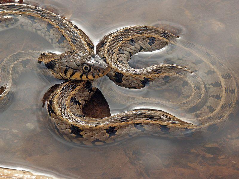 Komšija golim rukama uhvatio zmiju
