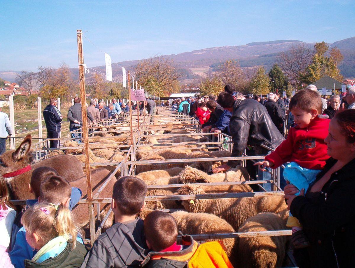 Izložba ovaca u Pirotu