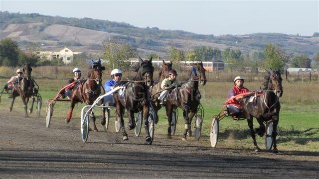 Pehar sa kasačkih trka u Leskovcu otišao u Beograd