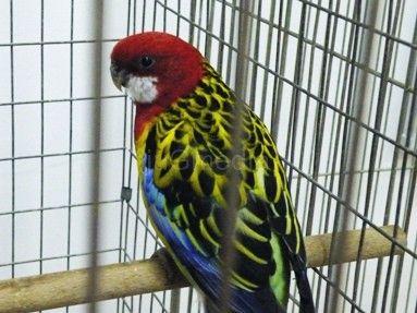 Otvoren ornitološki šampionat Srbije