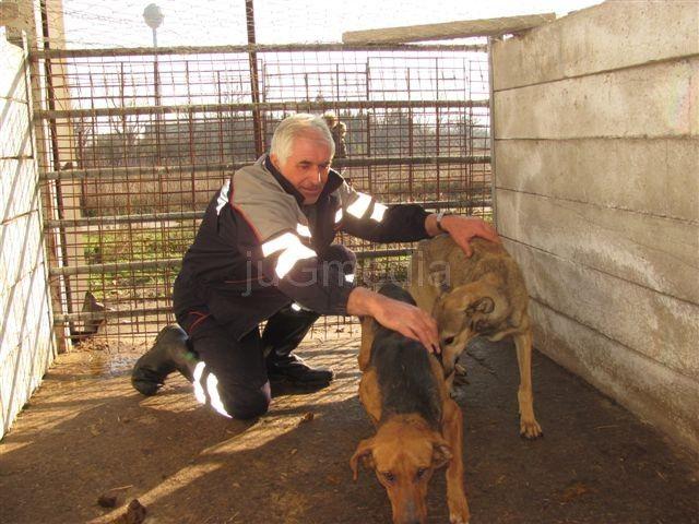 Veterinarska inspekcija u leskovačkom azilu za pse