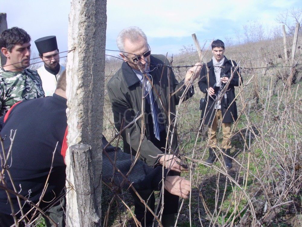 Vlasotinački vinogradari proslavili Svetog Trifuna