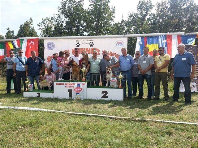 Sve nagrade sa takmičenja pasa ostale u Leskovcu