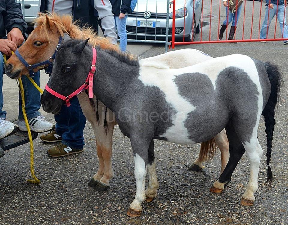 Za vikend karneval životinja