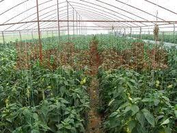 Sve više gazdinstva na teritoriji Pčinjskog okruga bave se organskom proizvodnjom