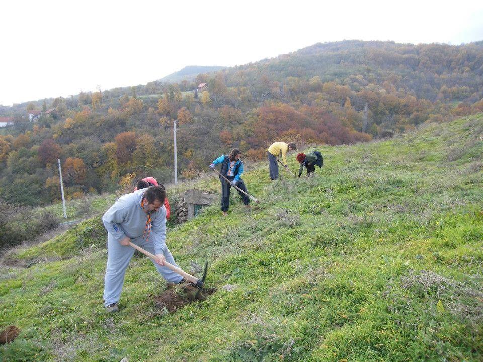Izviđači spremili teren za sadnju jorgovana