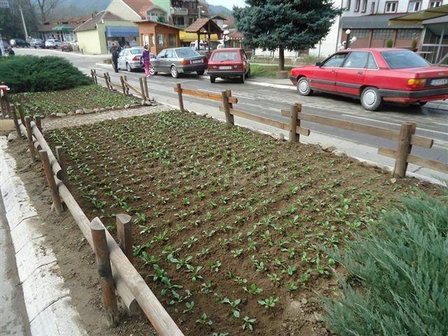 Radnici grdeličkog Komunalca uzgajaju i cveće