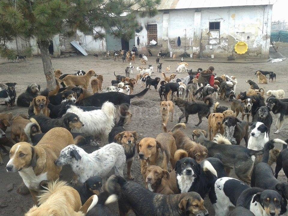 Ceo svet brani niški azil za pse