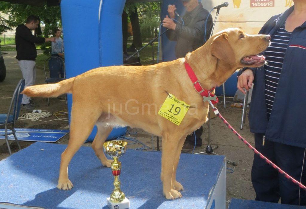 I mešanci na izložbi pasa u Vranju