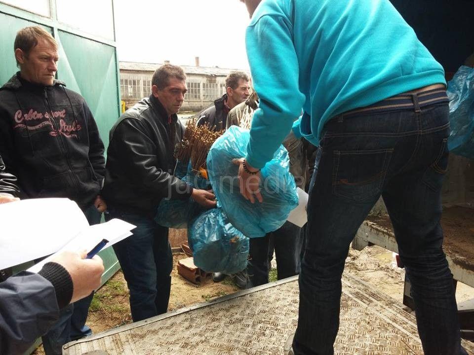Podela besplatnih sadnica u Vladičinom Hanu