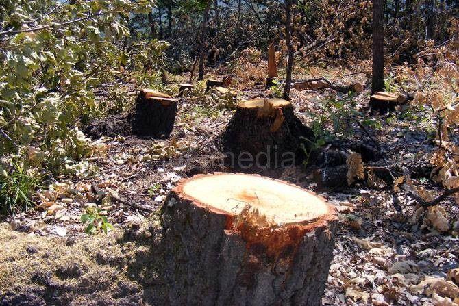 Gnjilančanin krao šumu u Medveđi
