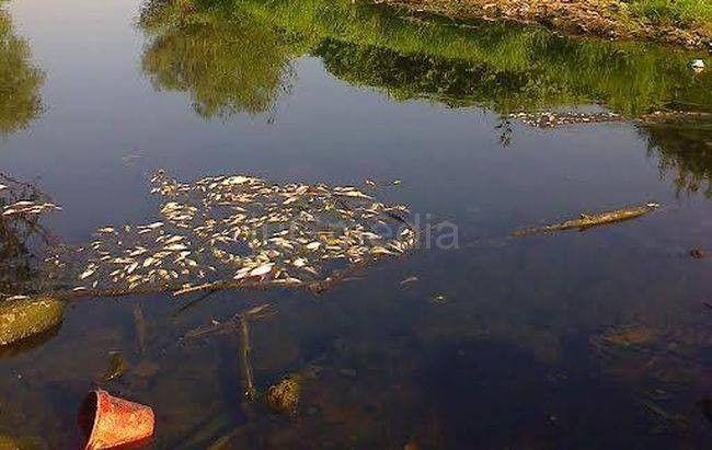 Pomor riba u Jablanici