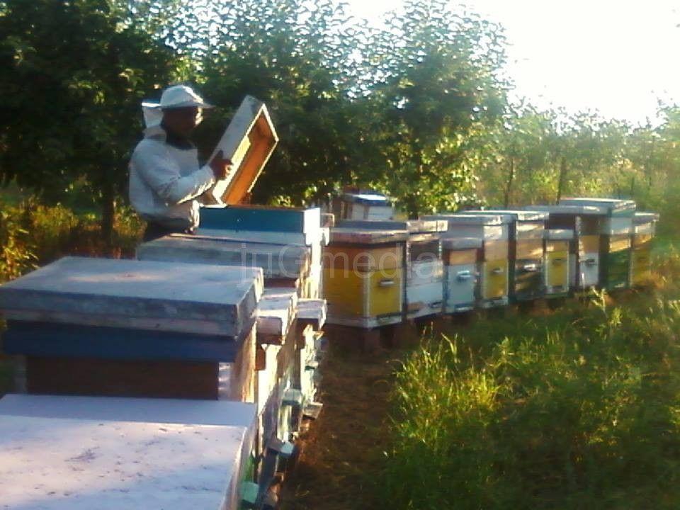 Pčelarstvo kao šansa za posao
