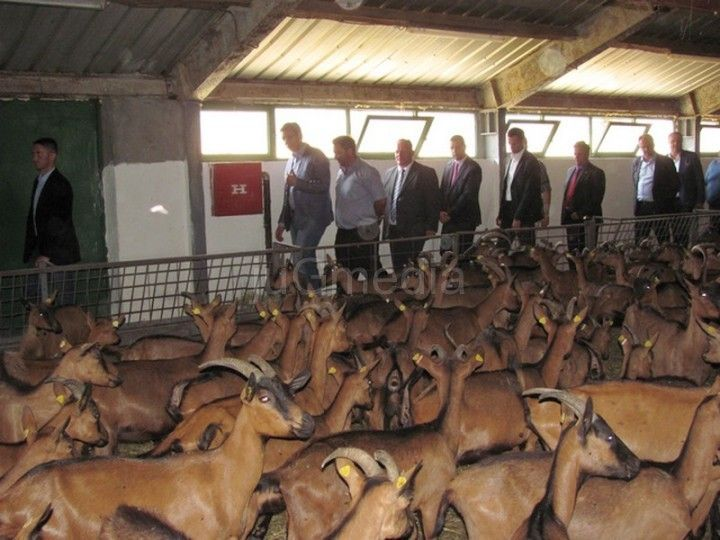 LESKOVAC05_Vucic obilazi farmu stoke u Crnoj Travi_FOTO M Ivanovic