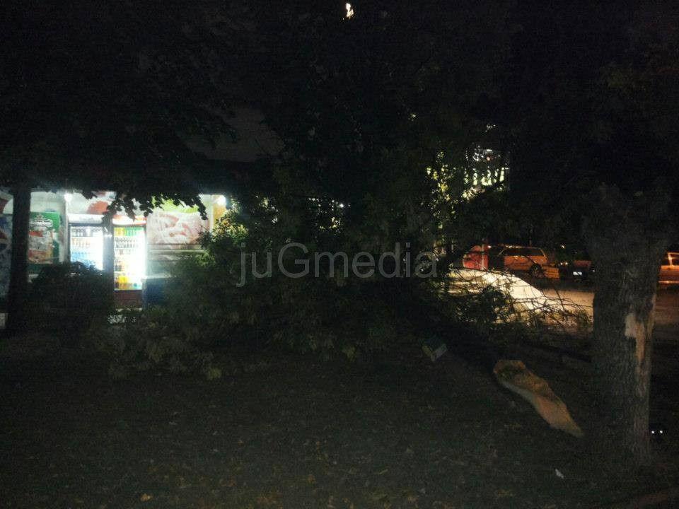Vetar lomio drveće u Leskovcu