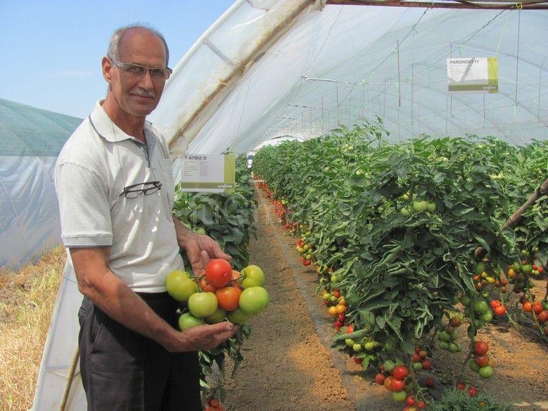Leskovački paradajz hit u Grčkoj i Crnoj Gori