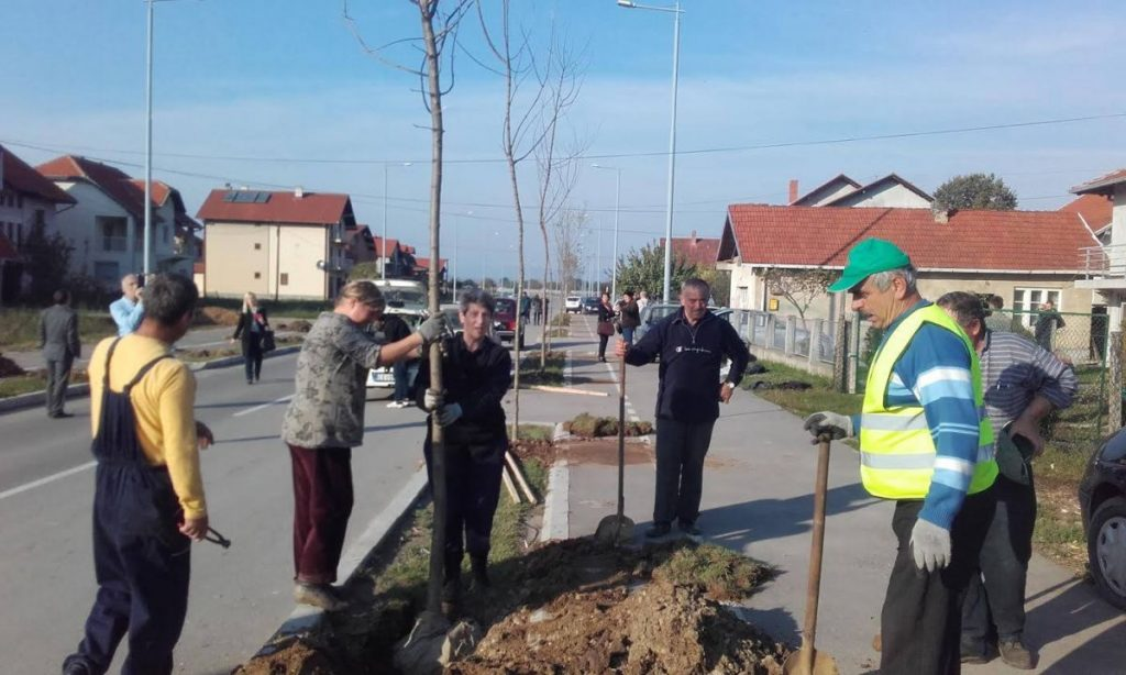 Posađeno 440 jasena i javora u Leskovcu