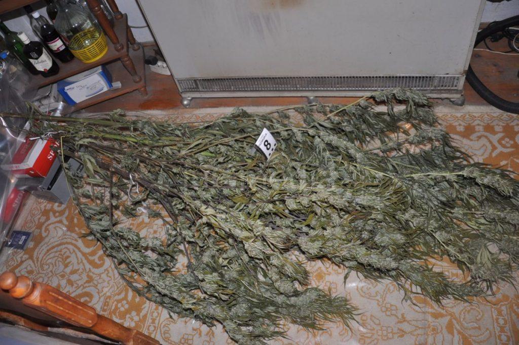 Policija zaplenila 83 kilograma marihuane