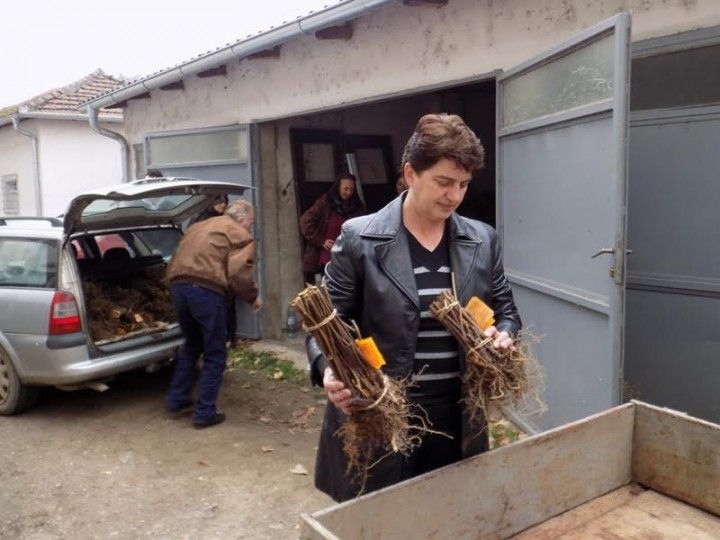 Žene sade maline u Lebanu