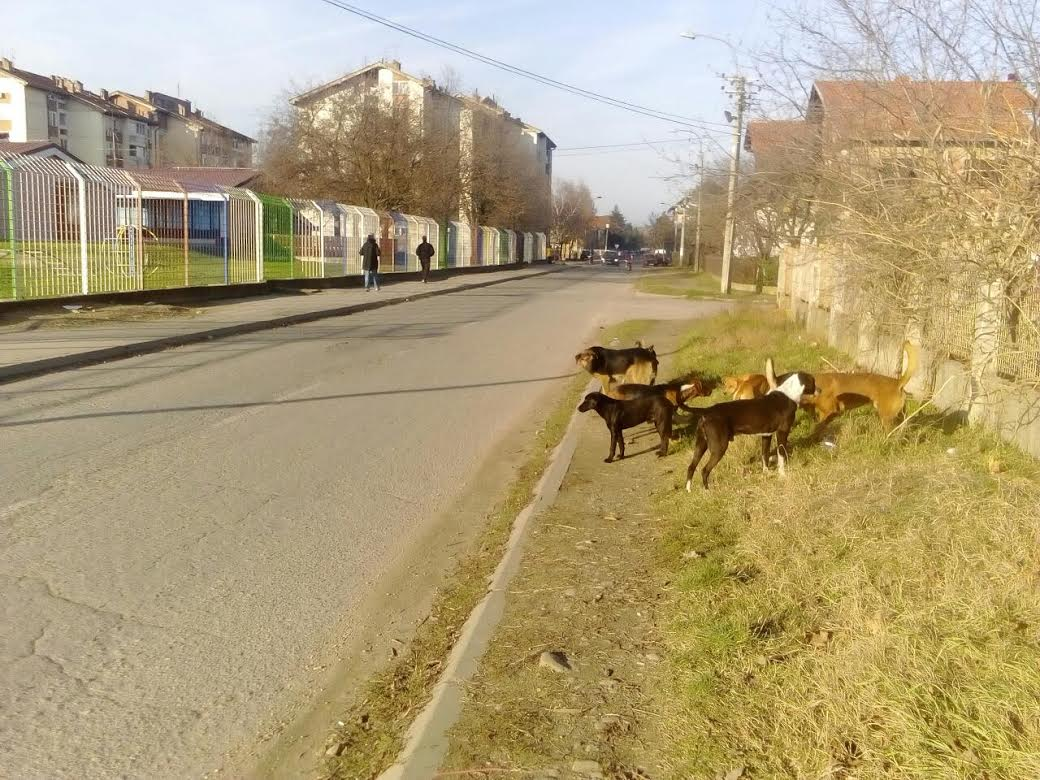 Čopori pasa u Leskovcu pored škole i obdaništa (VIDEO)