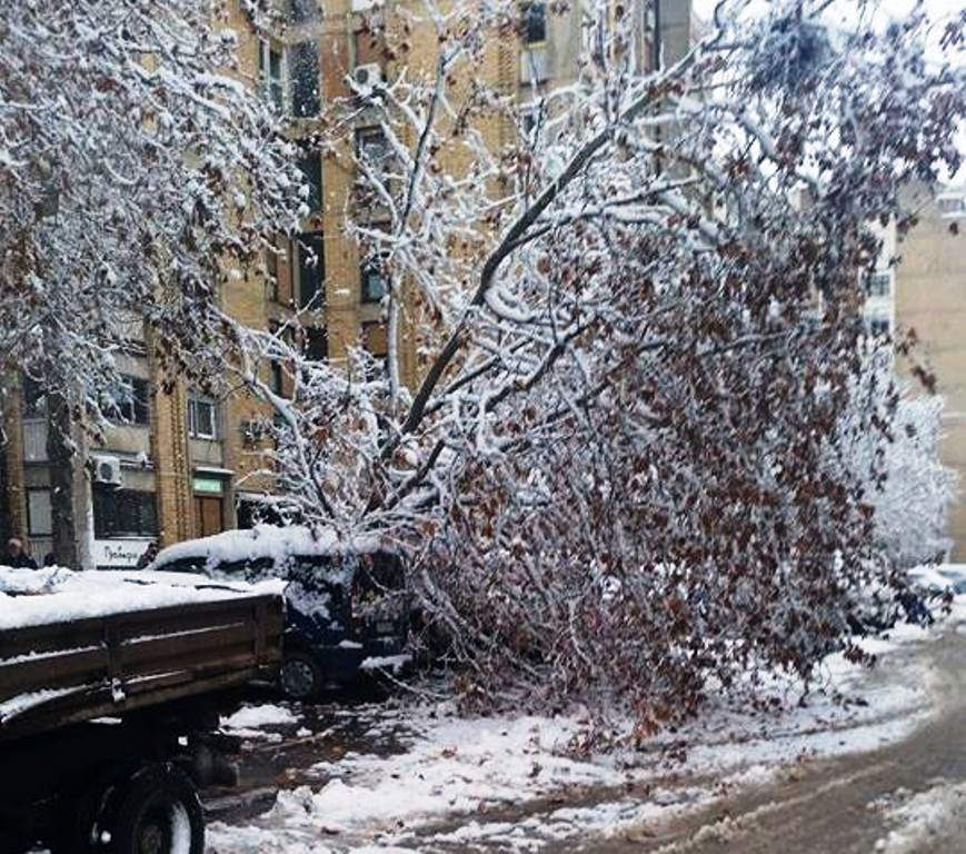 Drvo palo na automobil