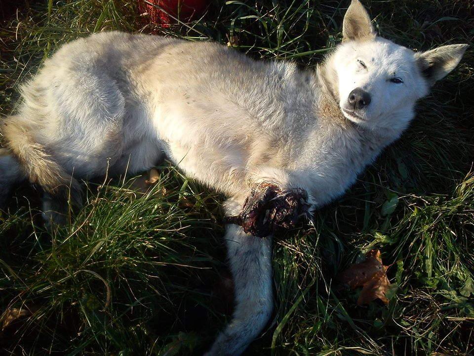 Monstrumi odsekli psu nogu!