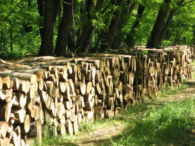 NEMA ZIME za one koji su ogrevno drvo nabavili na vreme
