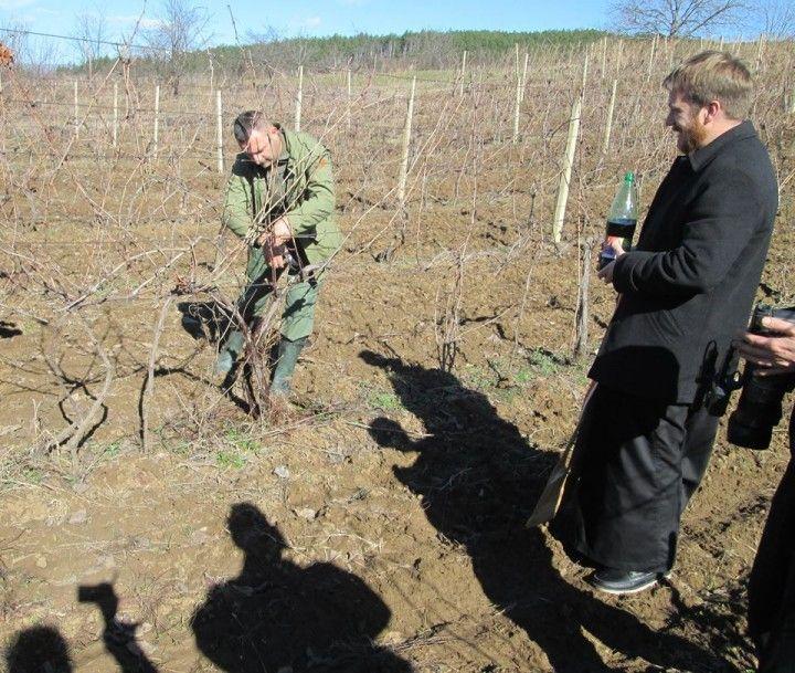 rezanje loze-vinogradari