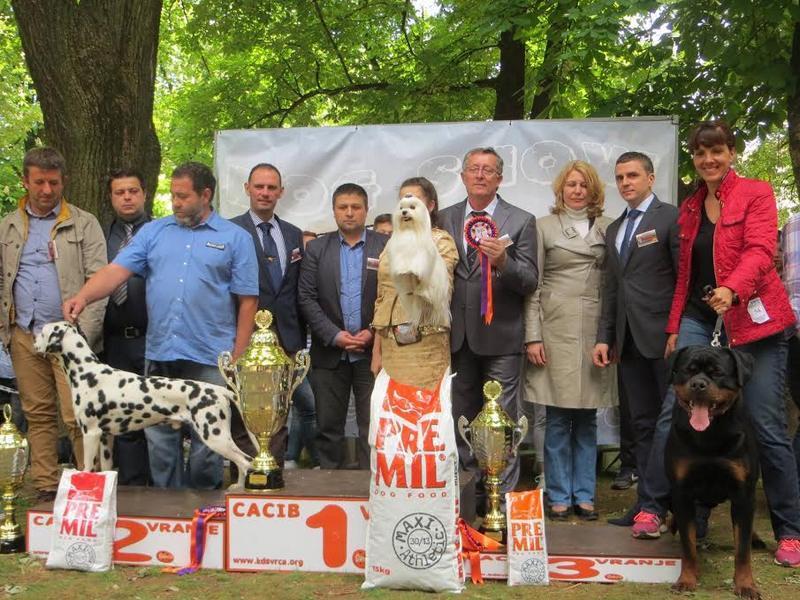 Beli maltezer iz Ukrajine glavni pobednik CACIB u Vranju