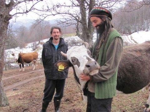 Kvrgava koža i u Crnoj Travi, uništenje 10 goveda