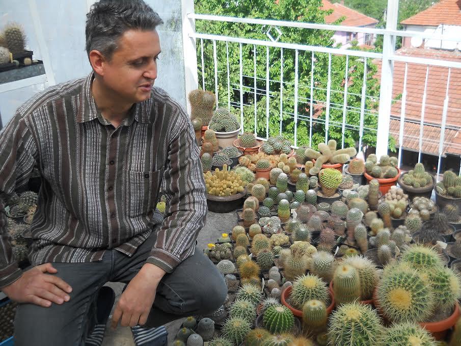 Ljubav je kao kaktus