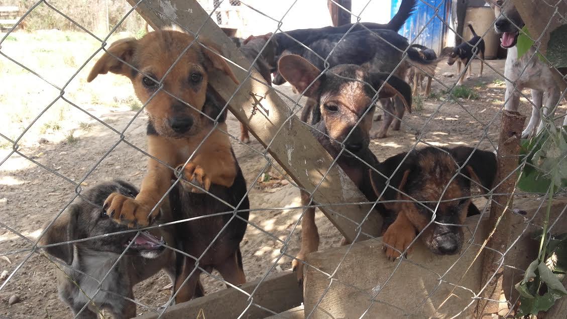 POGLED IZNUTRA Svakog psa iza ovih žica prati tužna životna priča