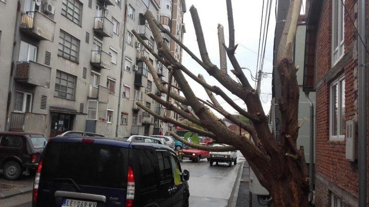 Formiraju se novi drvoredi – počela jesenja sadnja