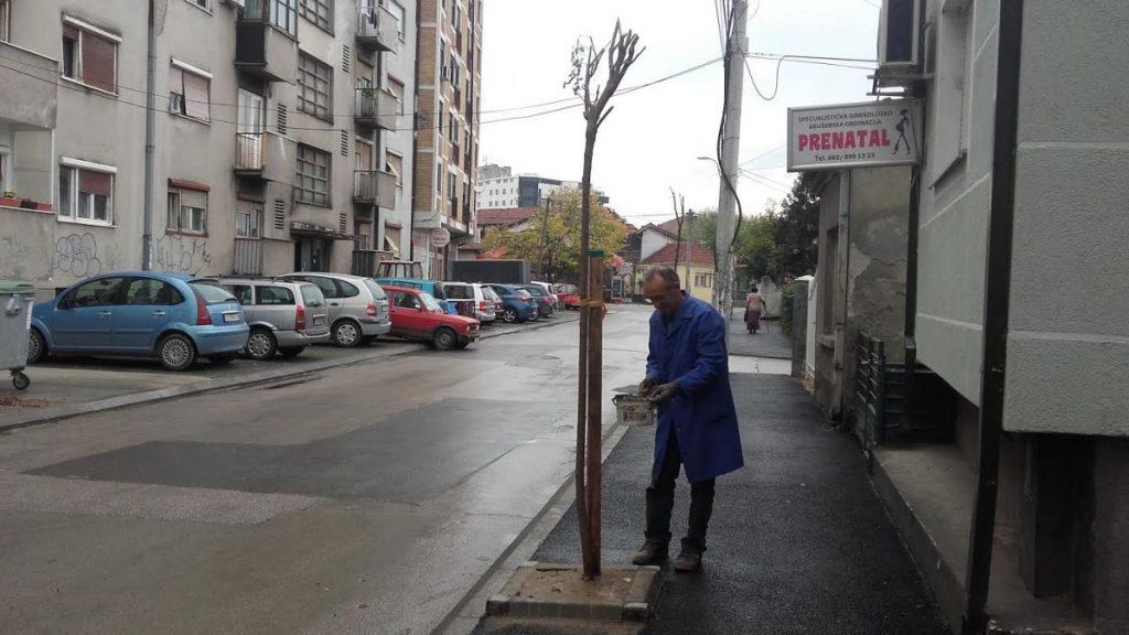 drvoredi-2