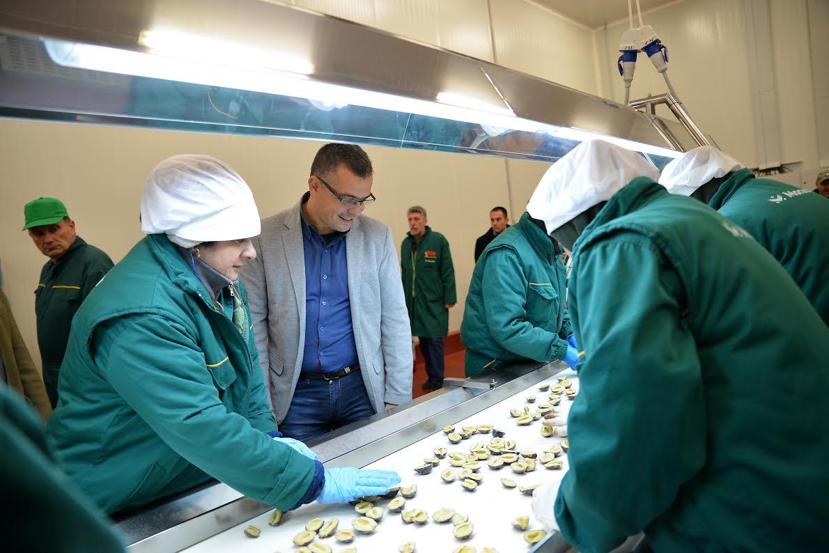 Aleksinac, 17. oktobra 2016 - Ministar poljoprivrede i zastite zivotne sredine Branislav Nedimovic danas je u Aleksincu posetio preduzece Monikom - PIK Aleksinac. FOTO TANJUG / DIMITRIJE NIKOLIC / bb