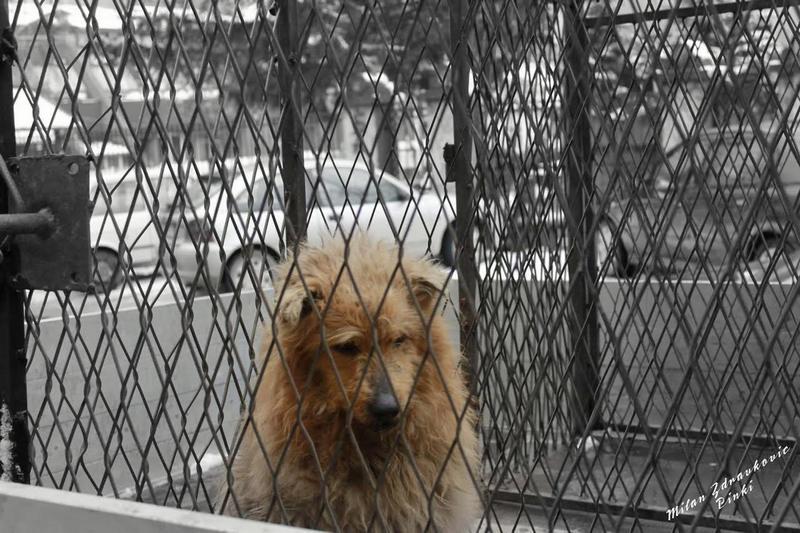 Od danas ponovo akcija hvatanja pasa lutalica